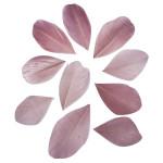 Plumes coupées rose antique 5 - 6 cm