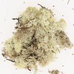 Mousse naturelle Lichen Naturel 50 g