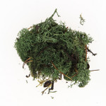 Mousse naturelle Lichen Vert olive 50 g